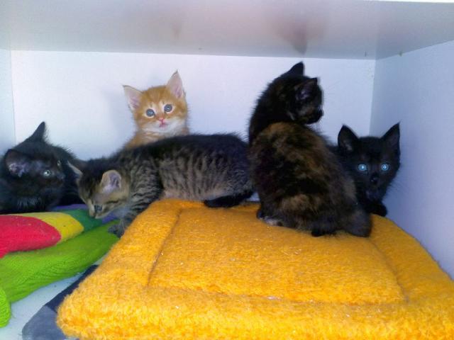 Pět koťat od Májiny
