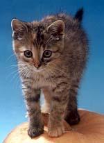fc329caa953 Kocky-online.cz - kočičí portál . . článek Máme doma koťátko